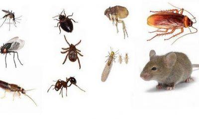 Home Bug Free