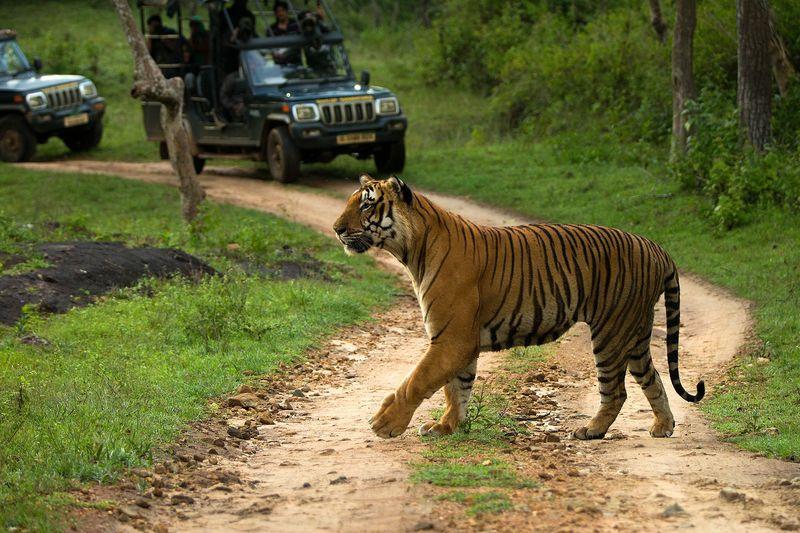 Leopard Spotting Destinations in India
